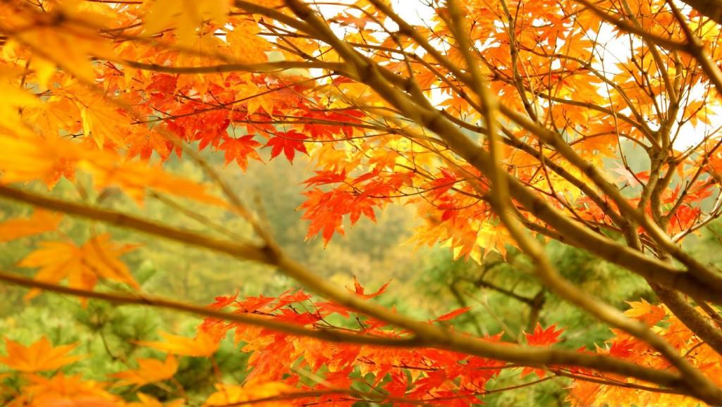 autumn-desktop-wallpapers.html-216